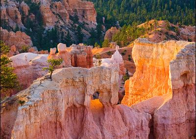 Bryce Canyon 0634