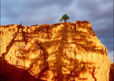 Bryce Tree 0272