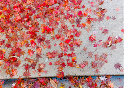 Fall Leaves 3938