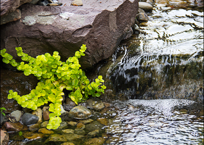 Waterfall 7809