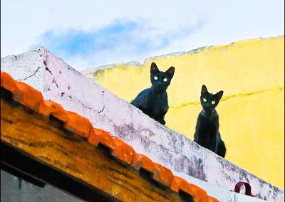 Dos Gatos 3736
