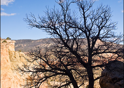 Tree at Ghost Ranch Tree 5655