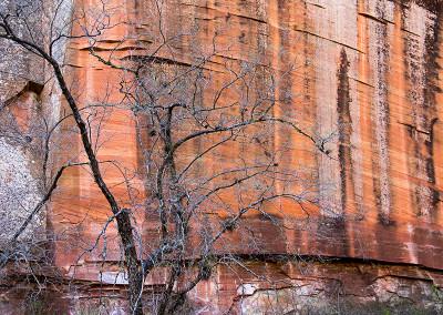 Oak Creek Canyon 7637