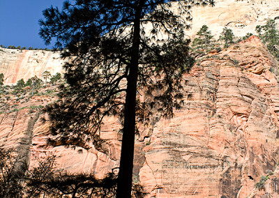 Tree in Zion 1382