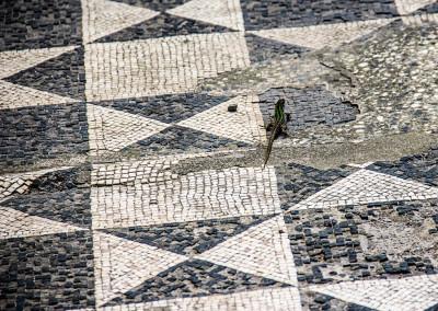 Ancient Roman Mosaic_7817