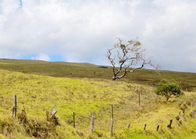 Saddle Road 1241
