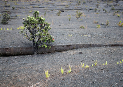 Kilauea Iki 0367