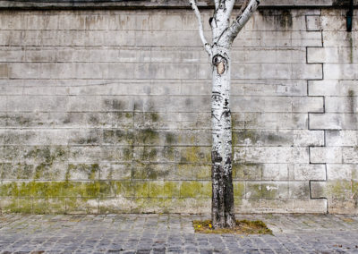 Tree on the Seine 0124